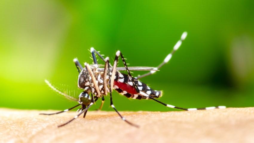 mosquito61