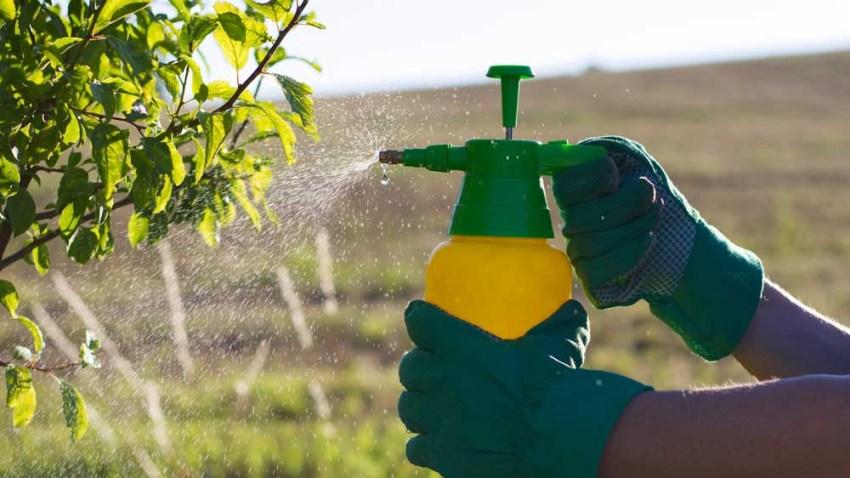 shutterstock-tlmd-pesticida