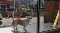Viral: perrita espera durante días en hospital donde estaba su dueño enfermo